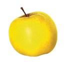 yellow_apple_notepad